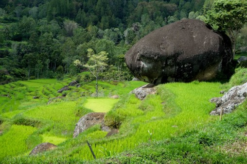 Tana Toraja - huge rock in rice fields Christian Jansen & Maria Düerkop