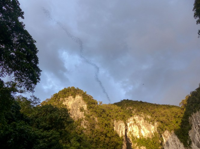 Mulu National Park - huge swarms of bats leaving the bat cave Christian Jansen & Maria Düerkop