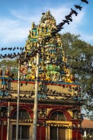 Yangon - Pigeons in front of Hindu Khali temple roof Christian Jansen & Maria Düerkop