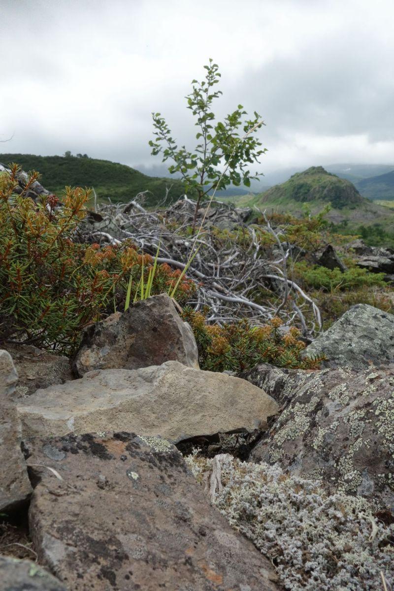 Bystrinsky National Park - Rocks and bushes