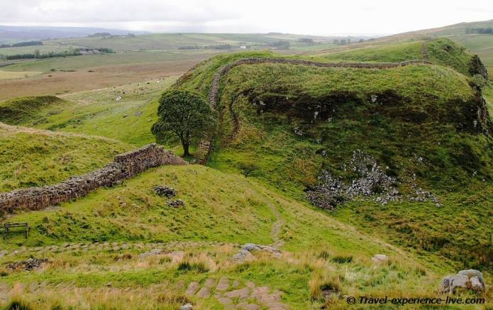 Sycamore tree (Robin Hood Prince of Thieves tree) on Hadrian's Wall