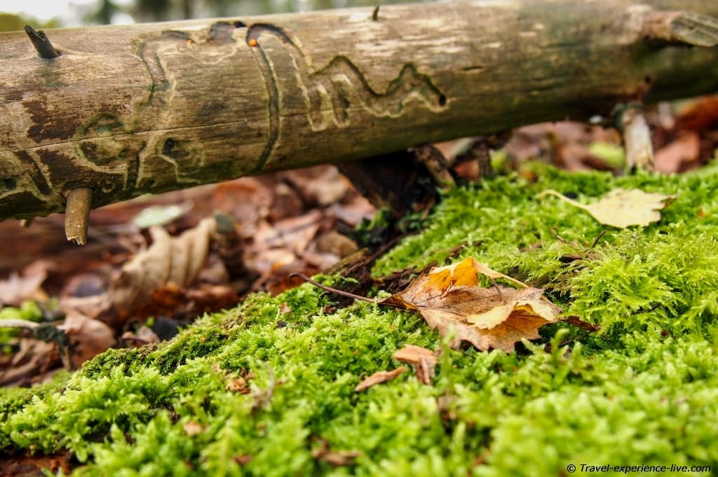 Moss, a branch and a leaf.