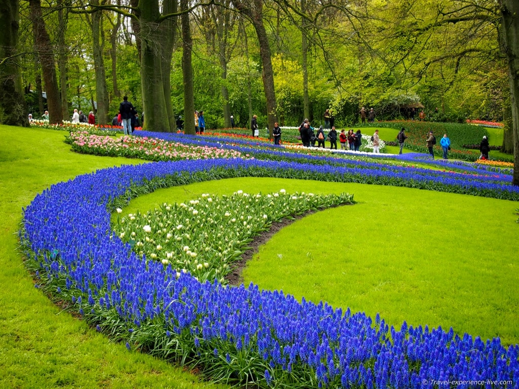 Spring flowers in Keukenhof, Holland.