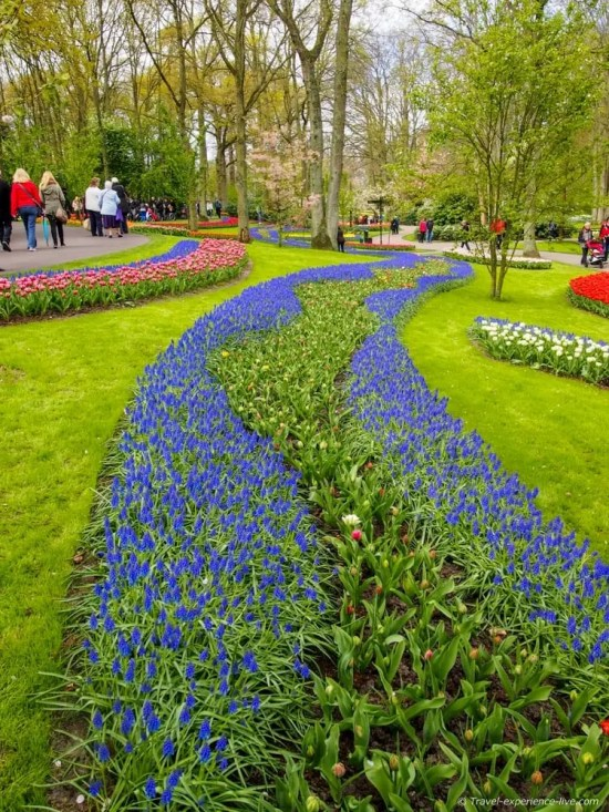 A spectacle of colors in Keukenhof, the Netherlands.