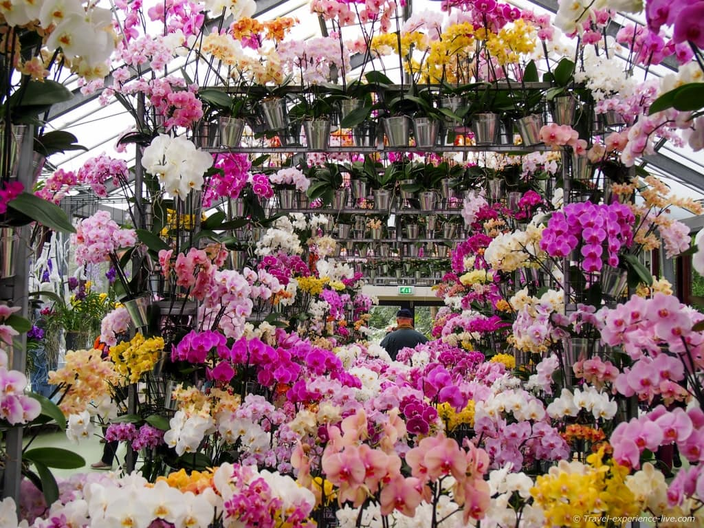 Orchid exhibition in the Netherlands.