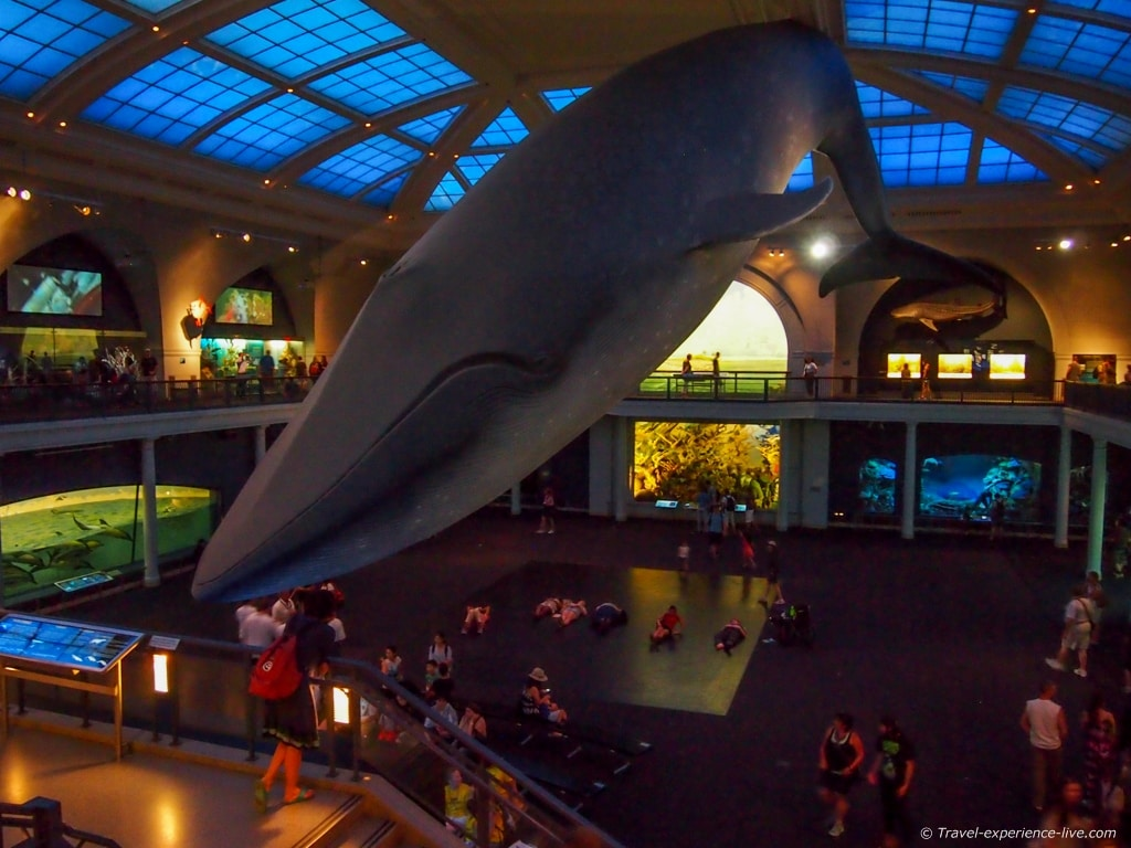 Nyc Museum Of Natural History Discount Tickets
