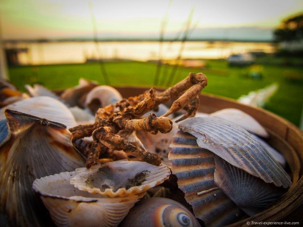 Shells from Horseneck Beach, Massachusetts.