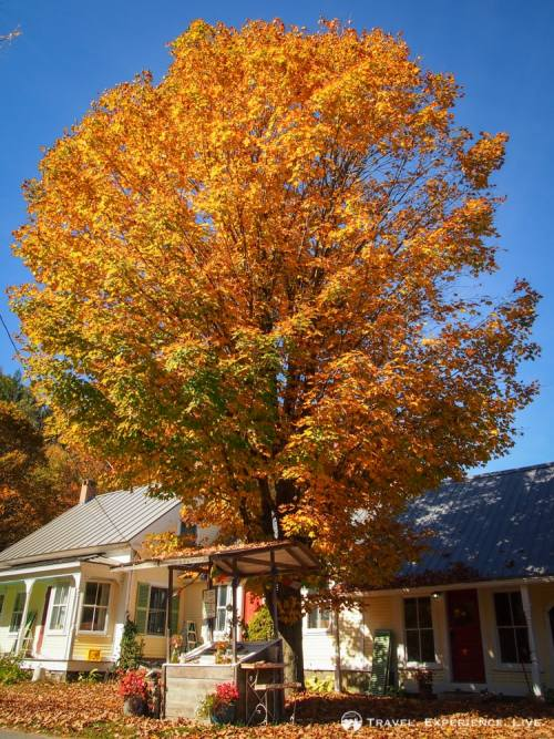 Fall in New England: farmstand and fall foliage