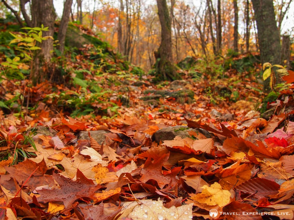 Leaves covering a New Hampshire forest floor