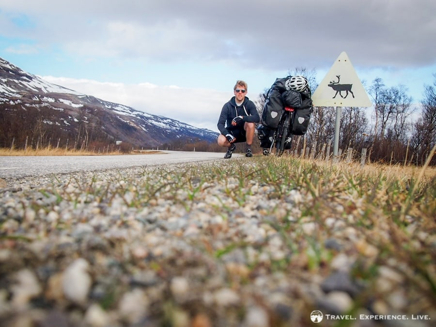 Signs warning for reindeer dotted the northern Norwegian roads