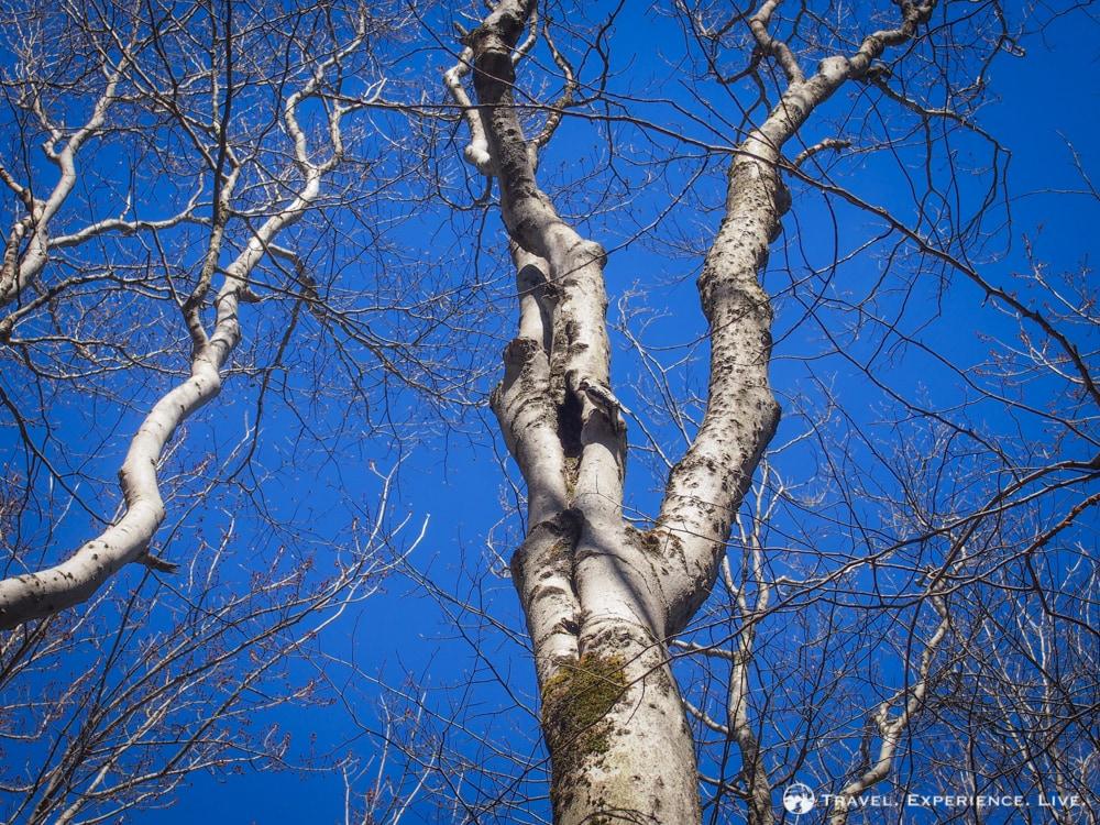 Woodpecker in Vermont