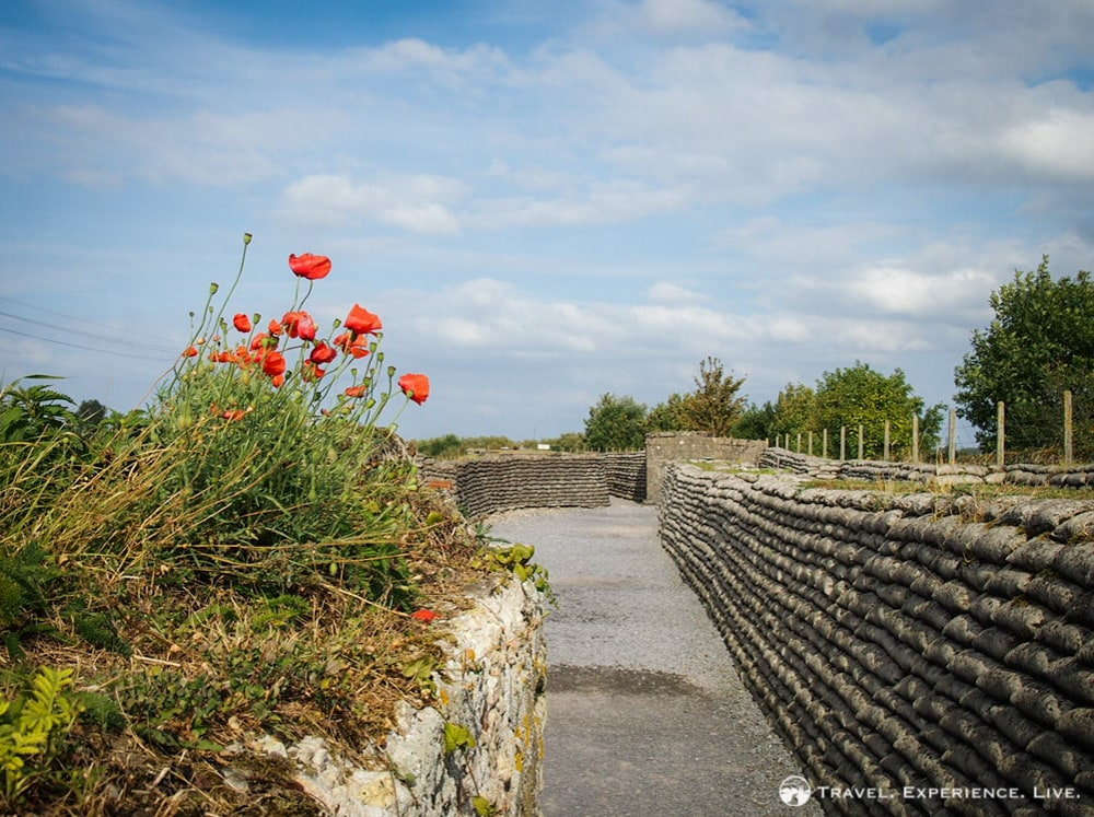 Poppies in the Trench of Death, Flanders Fields