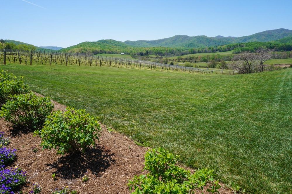 Vineyards at Pippin Hill Farm, Virginia
