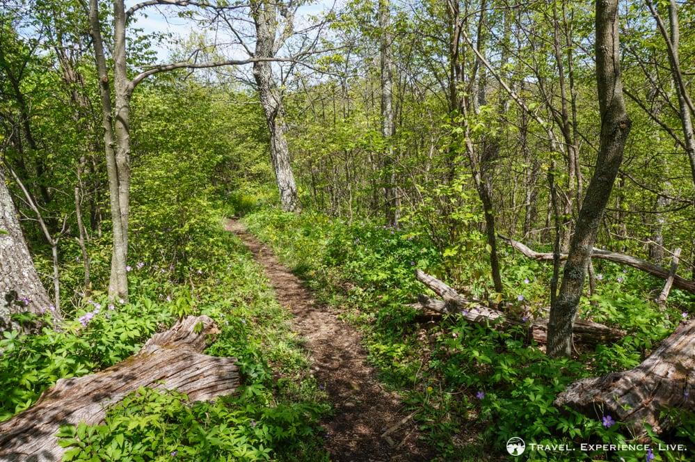 Trayfoot Mountain Trail, Shenandoah National Park