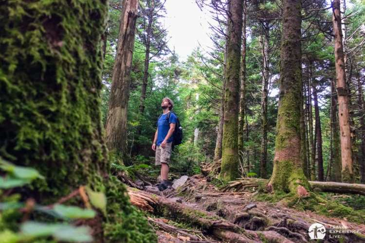 Adventuring in the woods of Mount Rogers National Recreation Area