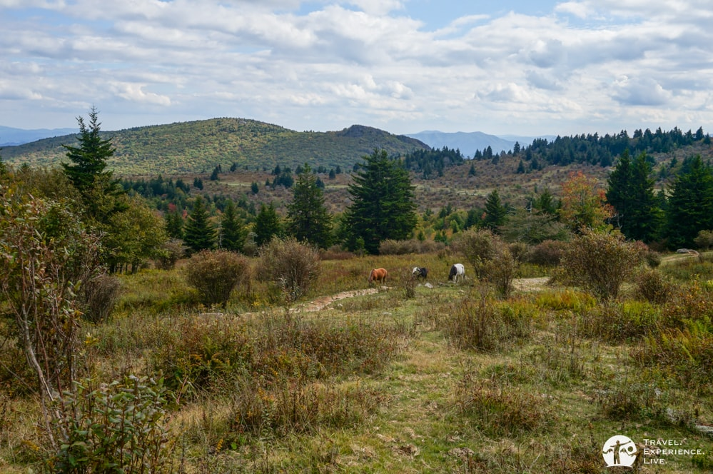 Wild ponies, Virginia's Grayson Highlands