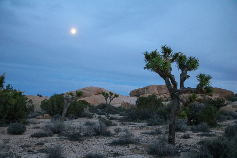 Moon over Jumbo Rocks Campground, Joshua Tree National Park, California