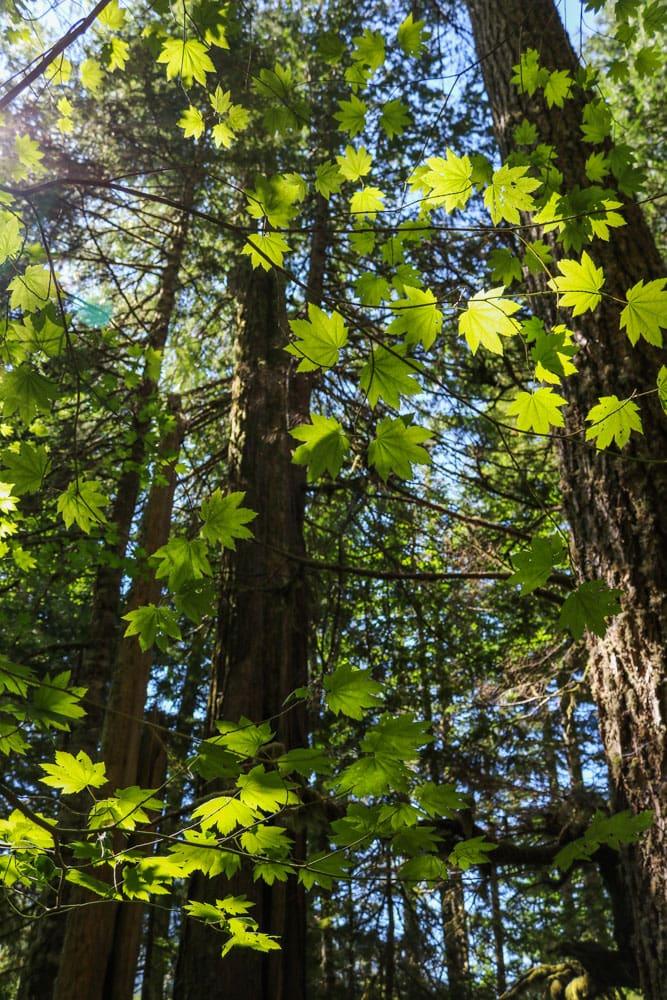 Trail of the Shadows, Mount Rainier National Park, Washington