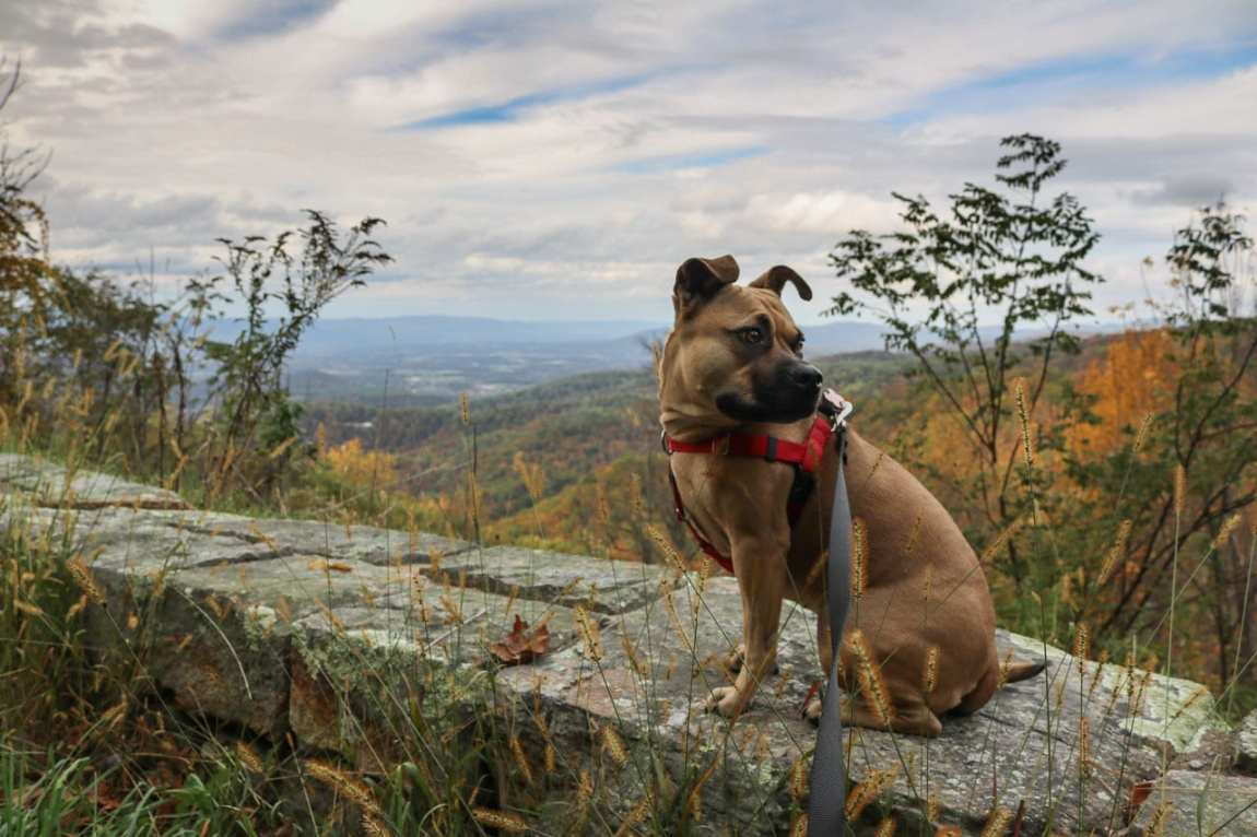 Best Dog Hikes In Shenandoah