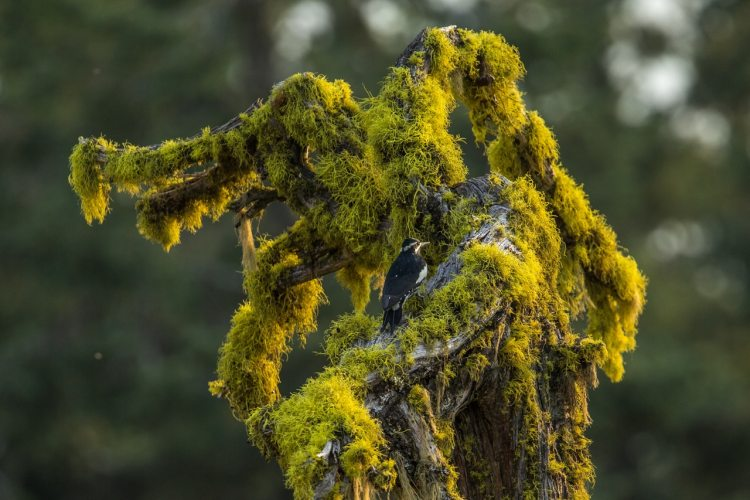 Cascade-Siskiyou National Monument - Ten Adventures in National Monuments