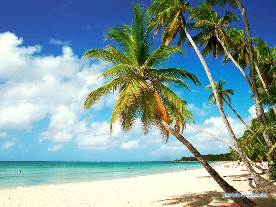 Les 5 plus belles plages de la Martinique