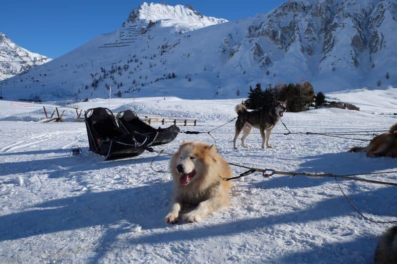 chiens_traineau_tignes