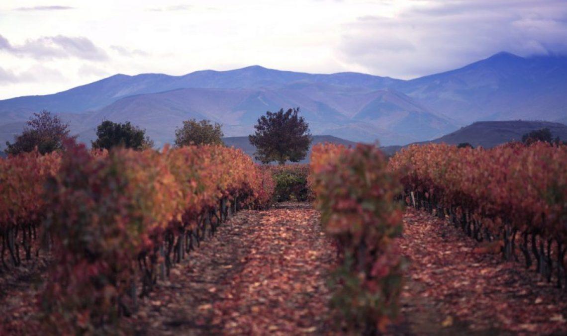 vivanco_Rioja