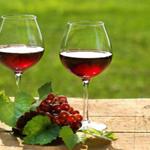 travel-slovenia-wines