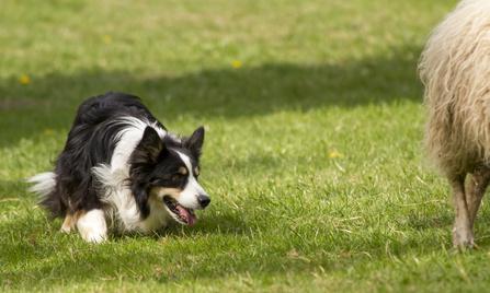 HtehundSeminar zum Reinschnuppern  Urlaub mit Hund fr Htehunde  travel4dogs  Wandern und