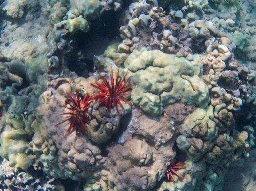 Maui Underwater-20