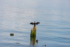 Wildlife on the Columbia River