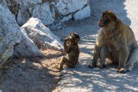 Famous Monkeys