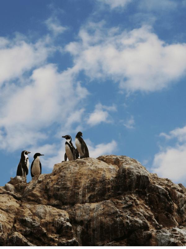 Paracas, Peru: Your Guide to a Luxurious Coastal Escape