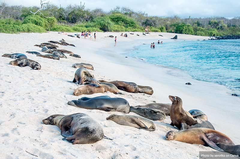 Leões marinhos em Galápagos