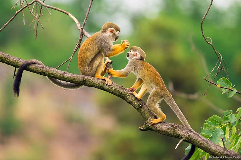 Macacos na Amazônia