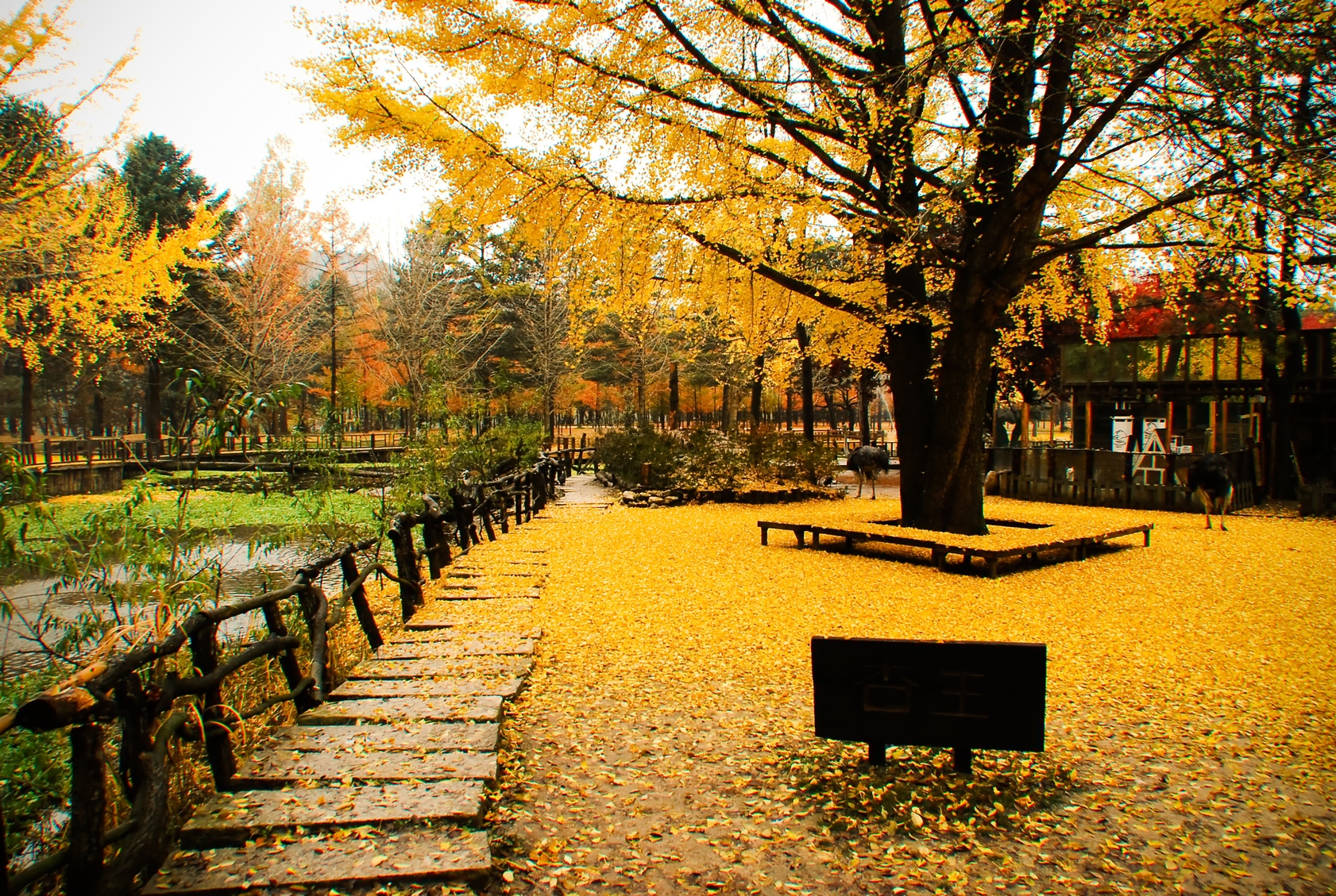 Teaching Position in Yongin City