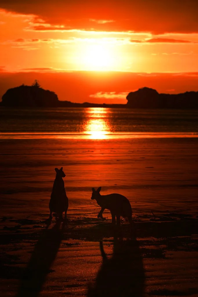 Cape Hillsborough with the Kangaroos  Travel Photography