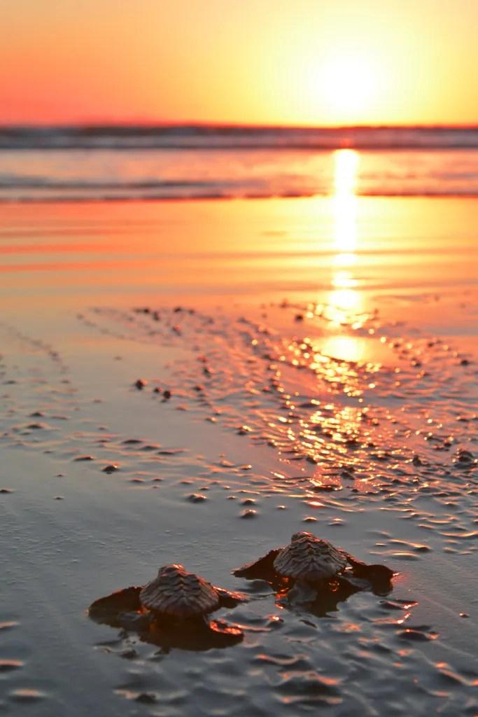 Cute Agnes Wallpaper Agnes Water Beaches Turtles Kangaroos And Sunrises