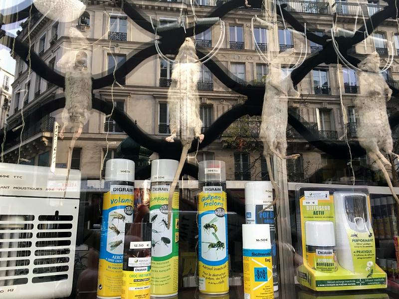 Paryż, Wystawa sklepu specjalizującego się wpułapkach nam.in.szczury