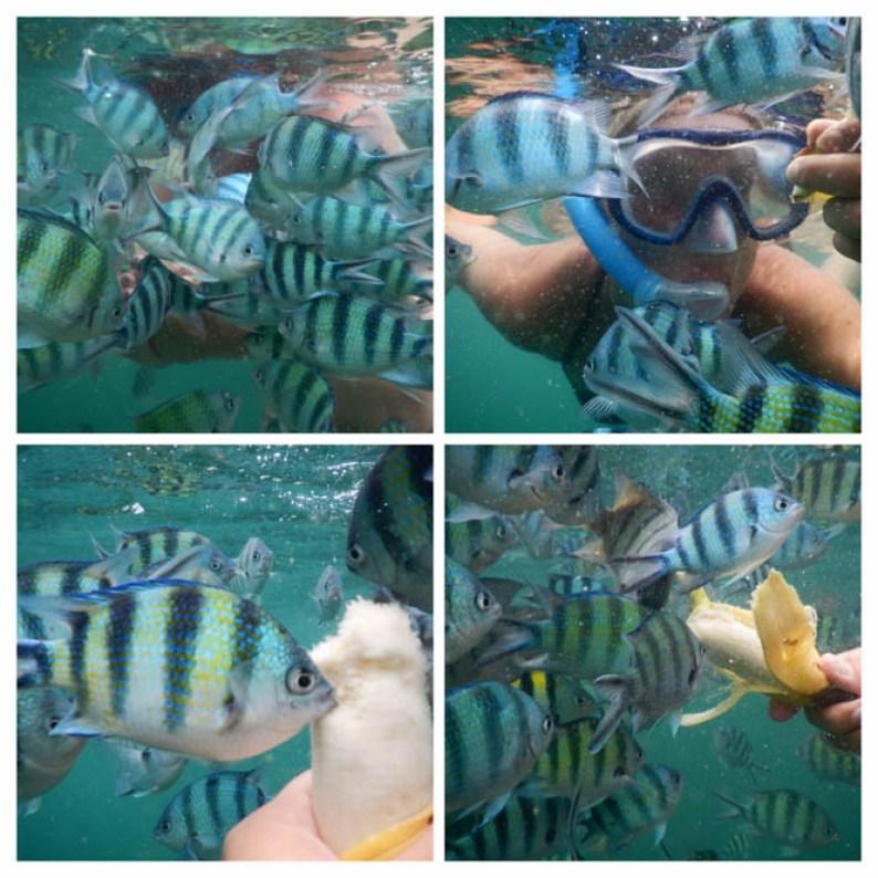 Koraal plaatsen, duiken en snorkelen