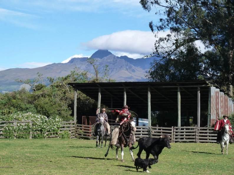 Paardrijden met de Ecuadoriaanse Cowboy's