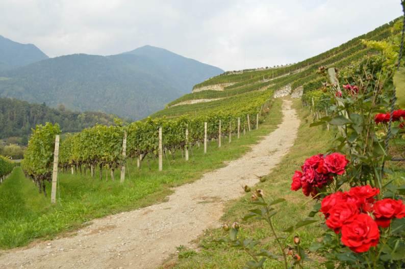 Wijnhuis Novacella
