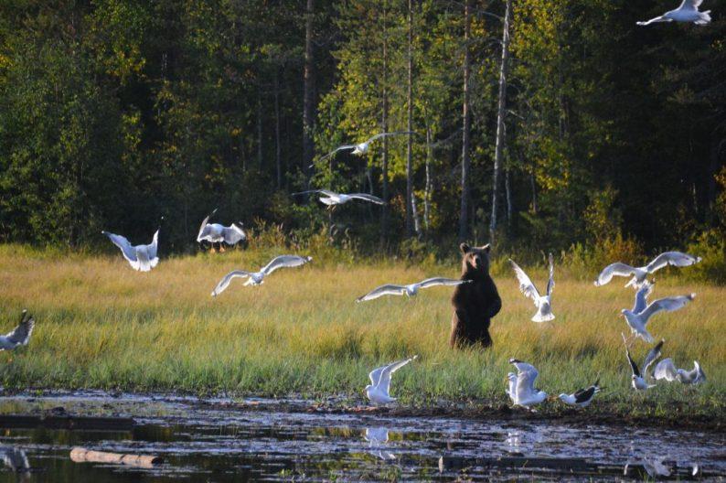 Excursies in Fins Lapland