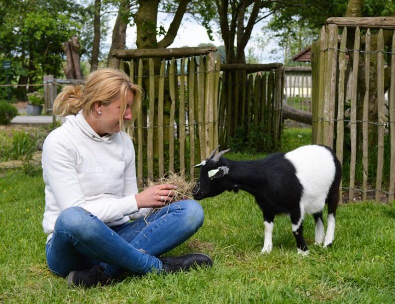 kinderboerderij-geit