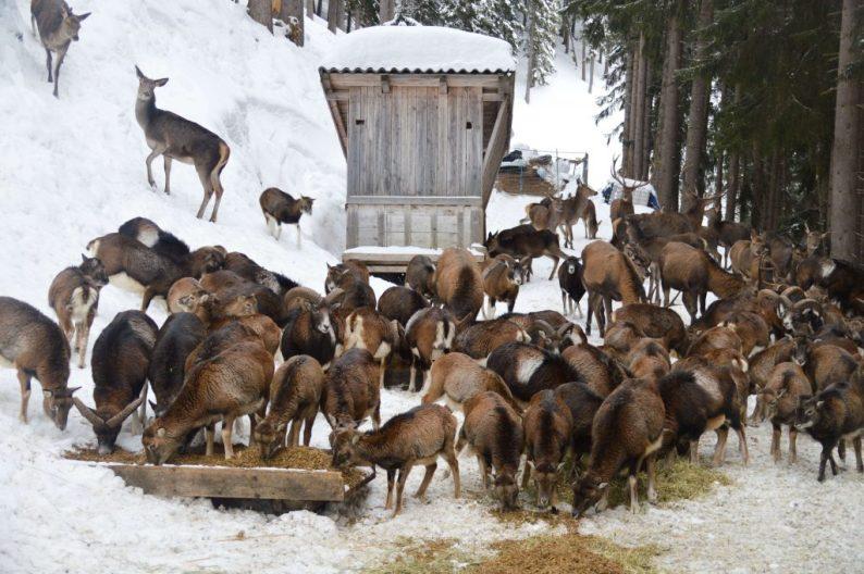 Activiteiten Zell am See - Kaprun in de winter