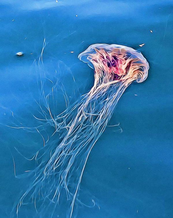 Jellyfish floating by Tatiana Travelways