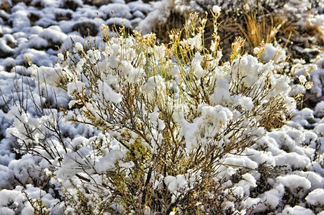 Sagebrush covered by snow on Utah country roads