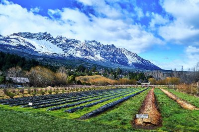 Patagonian raspberry farmlands in El Bolsón, photograph by Eduardo José Accorinti