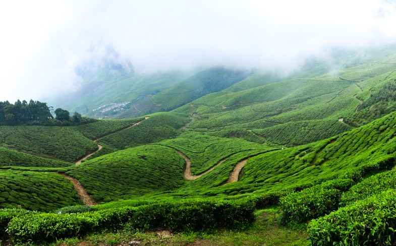 The rocky road to Kolukkumalai, world's highest organic tea estate