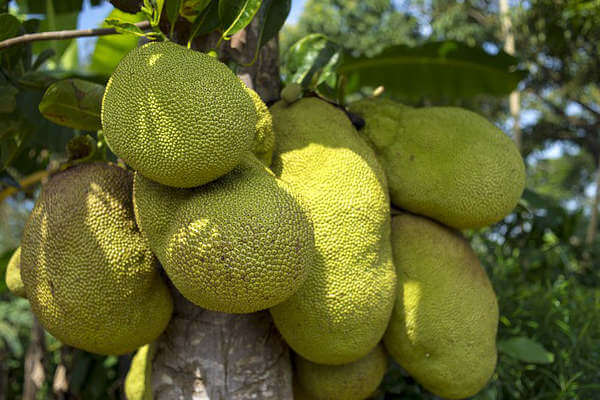 the most exotic fruit